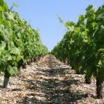 2011.04.10 万欧兰葡萄酒俱乐部系列73,黑皮诺(Pinot Noir)的继续探