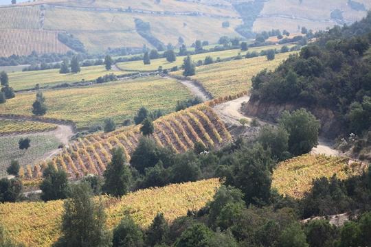 智利葡萄酒协会推广视频—葡萄酒大师陆江手把手教你品味智利葡萄酒