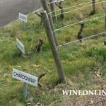 2010.06.20万欧兰葡萄酒俱乐部系列58,多变的夏多内Chardonnay Wineonline.Cn series 58,varied Chardonnay
