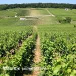 """[活动预告]2013.10.13 万欧兰葡萄酒俱乐部系列105,""""探索勃艮第初级课程"""""""