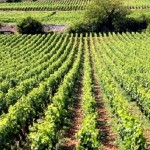 """2014.08.10 万欧兰葡萄酒俱乐部系列116,""""勃艮第行业协会官方认证初级课程"""""""