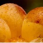 """2014.08.17 万欧兰葡萄酒俱乐部系列117,""""波尔多甜白酒课及六产区甜白酒品鉴"""