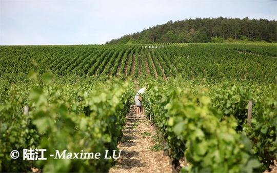 布根地(Bourgogne)简介