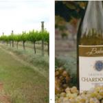 新西兰最大葡萄酒家族企业 BABICH WINES 迎来百年庆典