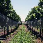 新西兰葡萄酒与中国市场概述