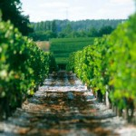 波尔多葡萄酒将获得中国地理标志产品保护
