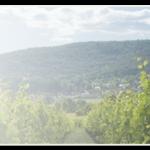 2014年全球10大葡萄酒出口国排行榜发布
