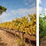 意大利最大生物动力酒庄爱唯侬堡的革命之路