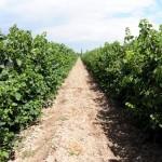 国外酿酒专家对贺兰山产区的建议
