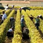 全球气候变暖对葡萄酒有哪些影响