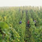 澳大利亚葡萄酒在中国消费情况报告