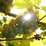 12月德国葡萄酒活动播报