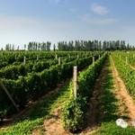 """万欧兰葡萄酒俱乐部系列142活动预告""""怡园酒庄垂直和Rioja老酒初探"""""""