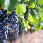 把非欧洲国家葡萄酒统称为新世界真的合适么