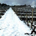"""万欧兰葡萄酒俱乐部系列148活动预告""""西西里岛活火山上产出的葡萄酒"""""""