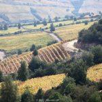 智利葡萄酒在中国