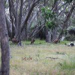 南澳葡萄酒之旅(中)-克莱尔谷、巴洛萨谷和伊顿谷