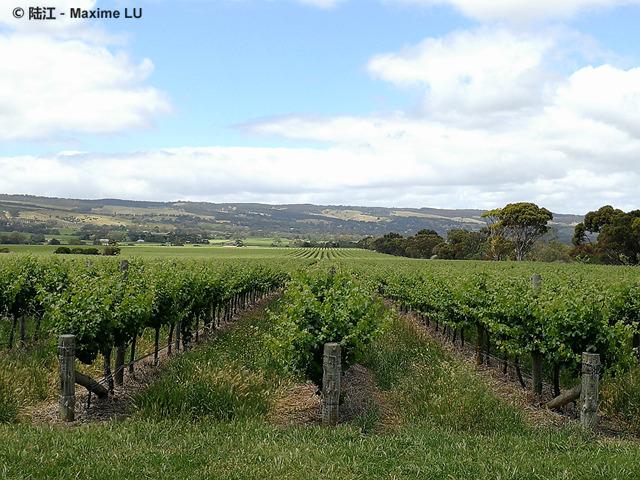 澳大利亚老年份葡萄酒及巴罗萨葡萄酒大师班即将举行