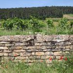 最新 | 勃艮第葡萄酒市场2016报告