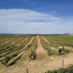 里奥哈产区允许对单一葡萄园进行分级啦