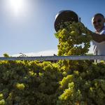 2017全球葡萄酒产量报告,达50年来最低