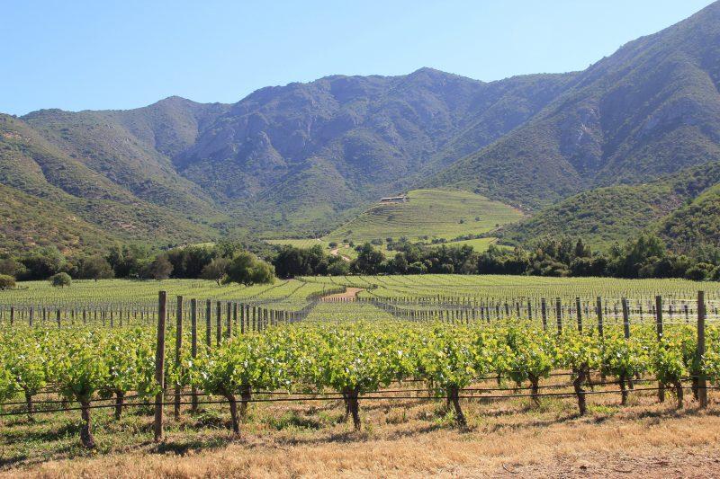 智利顶级葡萄酒赛妮娅21周年庆,暨2015年份佳酿发布