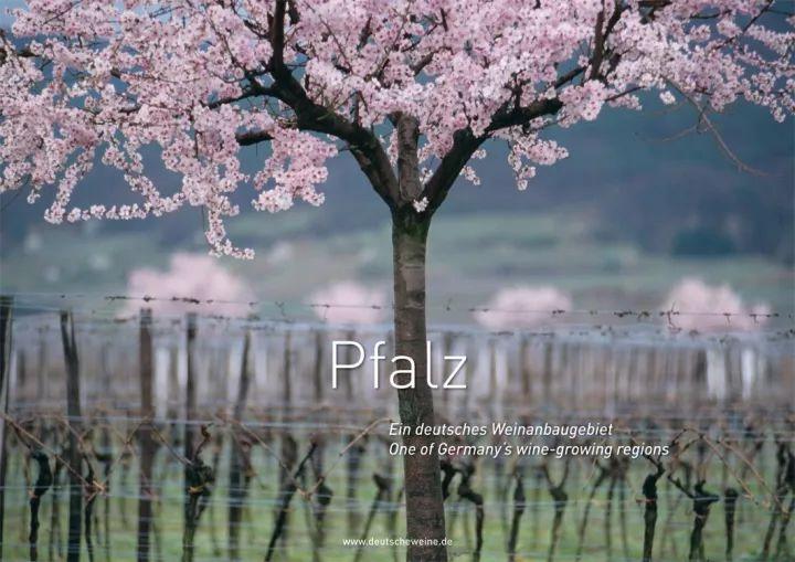 官方发布 | 2017年德国13大葡萄酒产区采收报告