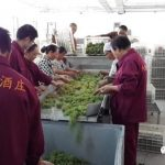 2017年中国葡萄酒产区报告(下) – 新疆,云南,山西,甘肃和东北