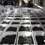 2017年中国葡萄酒产区报告(上) – 新疆,云南,山西,甘肃和东北