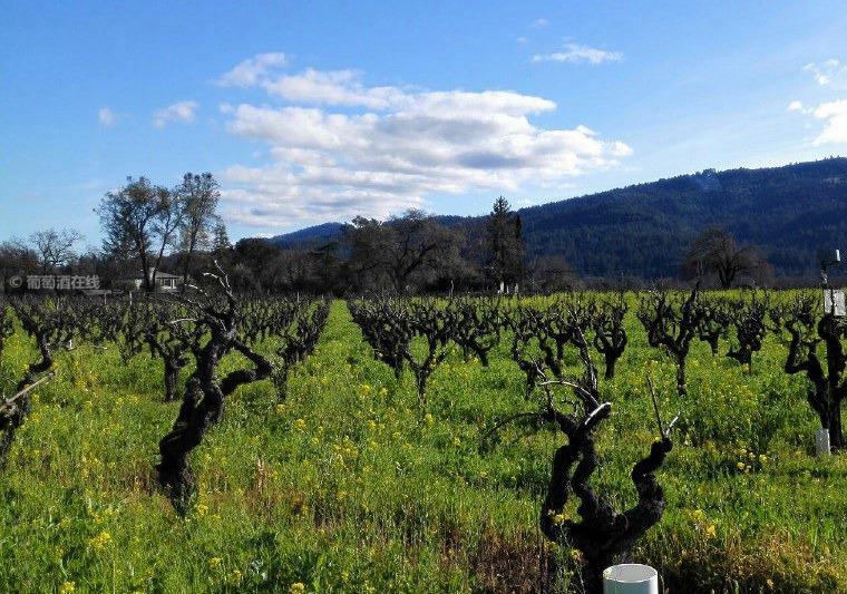 美国葡萄酒正式被额外加征15%的关税,综合税率达67.7%