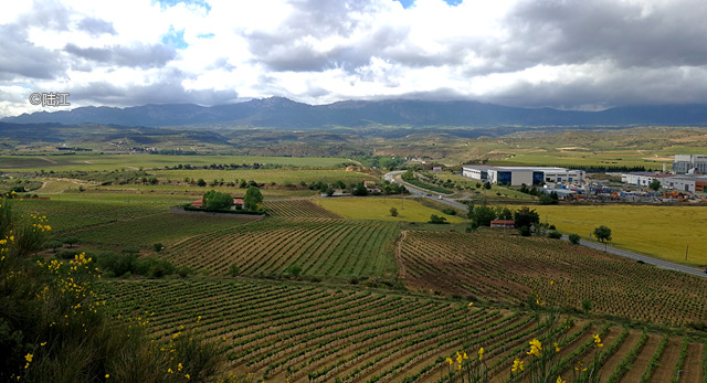 西班牙里奥哈葡萄酒产区2017年份,灾年的惊喜