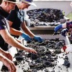 遇见丰富多样的顶级澳洲佳酿,就在 2018 澳大利亚葡萄酒管理局中国区路演!