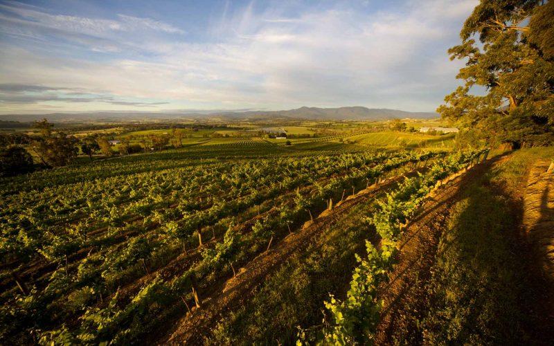 全澳洲国际均价一百美元以上的白葡萄酒