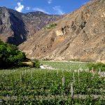 中国首个单一葡萄园标准发布