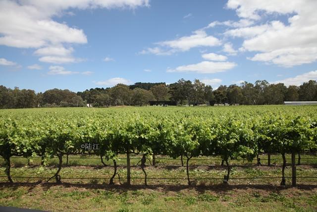 澳大利亚葡萄酒管理局中国区年度奖项  首次面向全行业开放报名申请