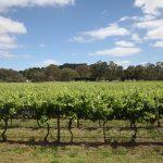 两大盛会共同见证澳大利亚葡萄酒在华市场蓬勃发展