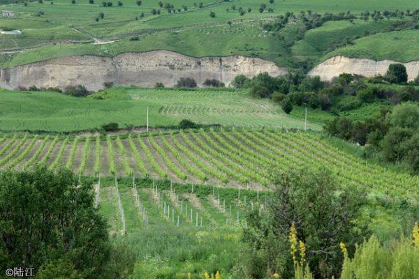 新疆伊犁河谷,集美酒美食美景于一体的葡萄酒产区